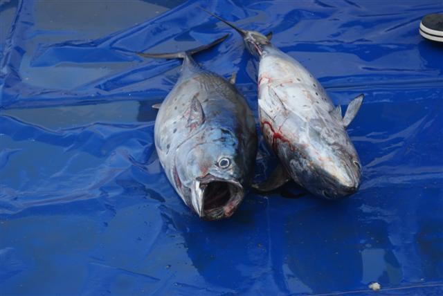 pesca3 small