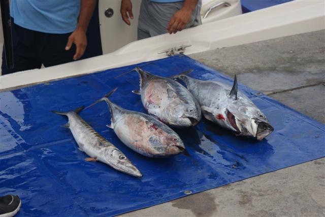 pesca5 small